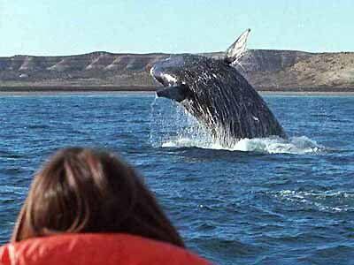 avistamiento ballenas argentina